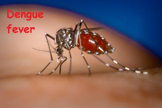 Dengue fever thaichata.ru